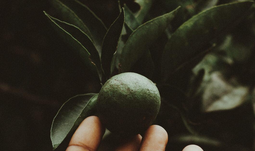 BellaDonna Herbs